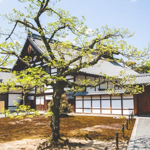 屋根瓦と木々の画像