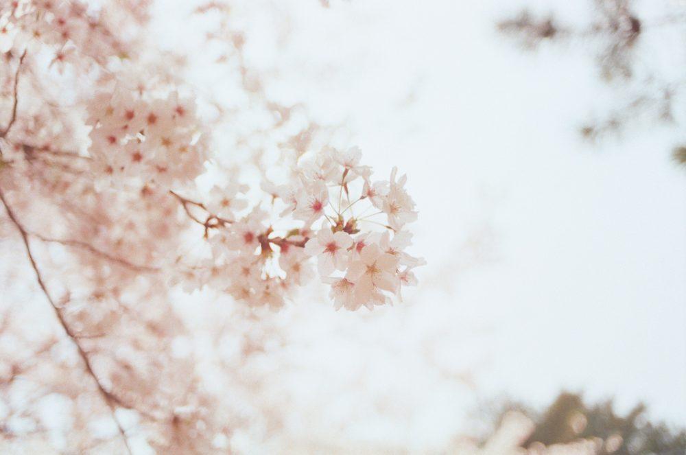 花咲く木々の画像