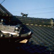 猫瓦|酒井屋根工事店
